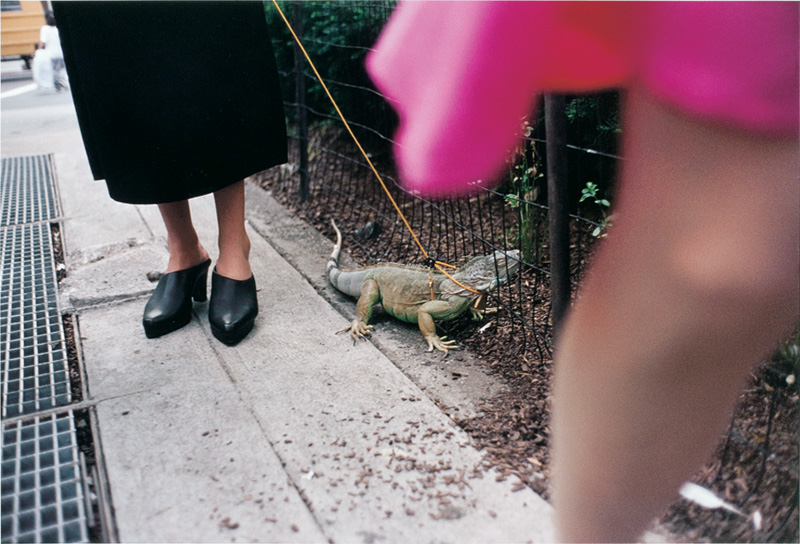 jeff-mermelstein-woman-walking-an-iguana